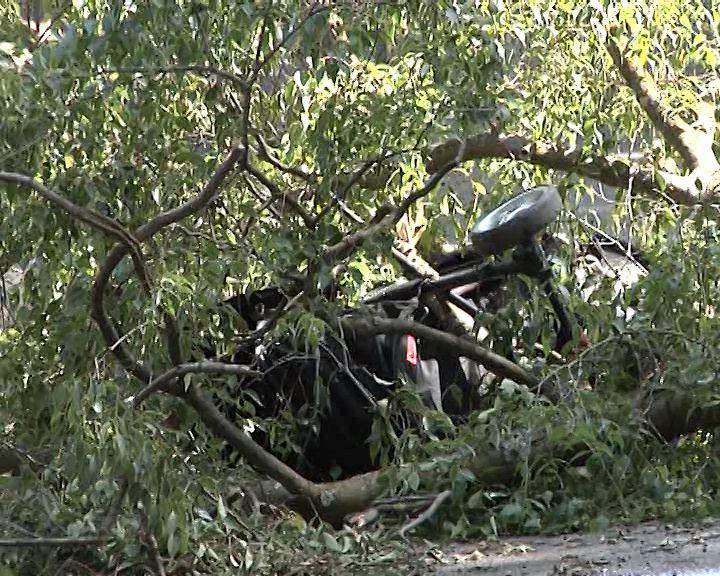 25-cascine-albero-caduto