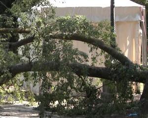 cascine-albero-caduto3