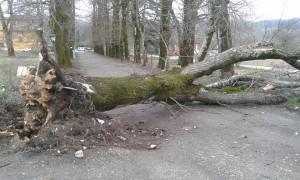 albero borgo