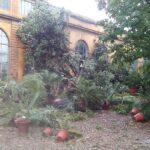Maltempo: Firenze, danni Orto botanico