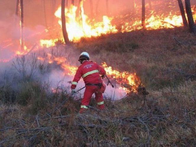 incendi maremma